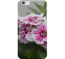 Sweet William growing in a garden iPhone Case/Skin