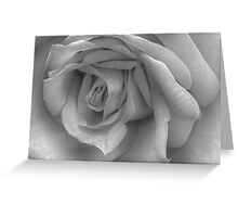 Photographing Rosa Greeting Card