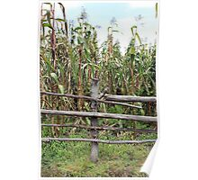 Wood Rail Fence and Corn Field Poster