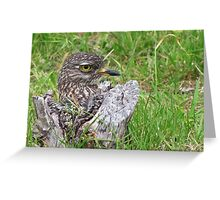 Spotted thick knee Greeting Card
