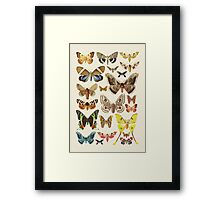 Collection Framed Print