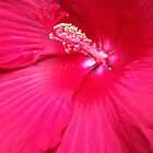 Hibiscus by SaraNS