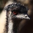 Portrait of female  Emu  - Wilpenna  Pound - Flinders Ranges by john  Lenagan