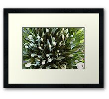 TULIPS FROM ABOVE Framed Print