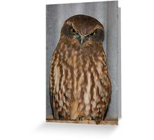 Let Sleeping Owls Roost. Greeting Card