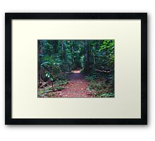 Border Track at Binna Burra Framed Print