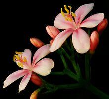BEAUTIFUL PINK FLOWER PICTURE/CARD by ╰⊰✿ℒᵒᶹᵉ Bonita✿⊱╮ Lalonde✿⊱╮