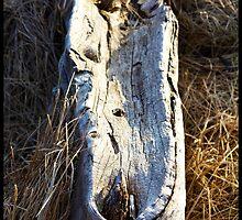 Bras d'Or Driftwood by BrasdOrLife