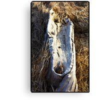 Bras d'Or Driftwood Canvas Print