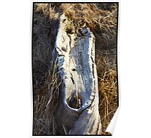 Bras d'Or Driftwood Poster