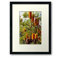 Banksia 1 Framed Print