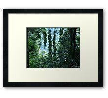 Rainforest at Binna Burra Framed Print