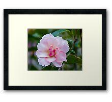 Camellia 4 Framed Print