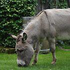 Lovely Donkeys Wall Calendar by Mythos57