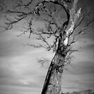 Scary Tree- Williamstown by Ben Loveday