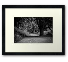 A forest walk. Framed Print