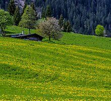 Alpine Meadow by Nick Jenkins