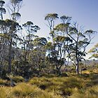 Cradle Mountain bushland by possumhollow