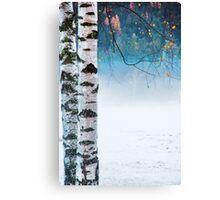 Birches in the mist Canvas Print