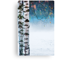 Birches in the mist Canvas Print