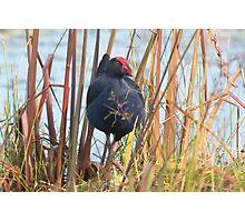 Wetland Regular Photographic Print