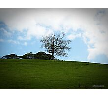 """ The Lonesome Oak"" Photographic Print"
