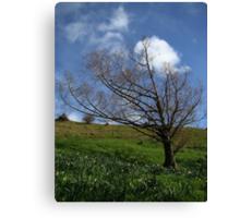 Tree on Mt. Hobson Canvas Print