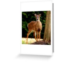 "Oh ""hi"" there !  Greeting Card"