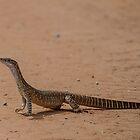 Sand goanna  by Normf