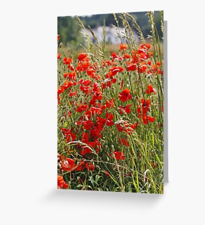Poppy Field in North Wales Greeting Card