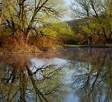 Botanical Reflections Landscape by Christina Rollo