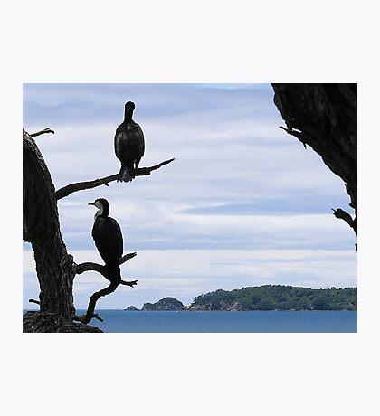 Perched On Whangaparaoa Photographic Print