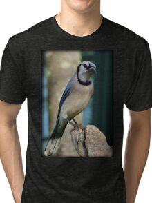 Bluejay Morning Tri-blend T-Shirt