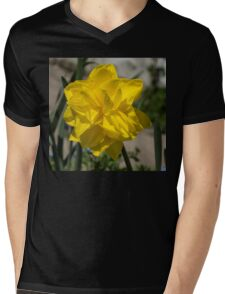 Sunny Yellow Spring - a Golden Double Daffodil Mens V-Neck T-Shirt