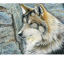 The Grey (but Colorful) Wolf Photographic Print