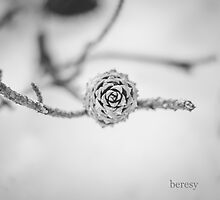 Winter Pine Cone by beresy