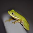 Lil Tree Frog  by Wviolet28