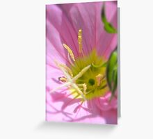 Showy Evening Primrose Greeting Card