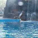 Dolphin Marine Magic - March 2014 by Joe Hupp