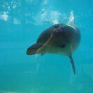 Dolphin Marine Magic - A Special Experience by Joe Hupp