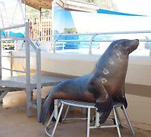 Dolphin Marine Magic - Seal Feeding by Joe Hupp