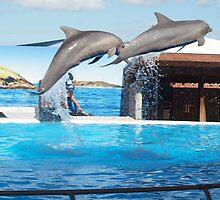 Dolphin Marine Magic - Flying Dolphins by Joe Hupp