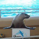 Dolphin Marine Magic - Smiling Seal by Joe Hupp