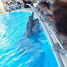 Dolphin Marine Magic - Post Show Experience by Joe Hupp