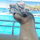 Dolphin Marine Magic - Balancing Act by Joe Hupp