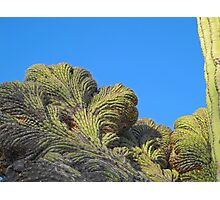 Fantastic Saguaro Crest Photographic Print