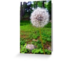 Make A Wish With A Dandelion  Greeting Card