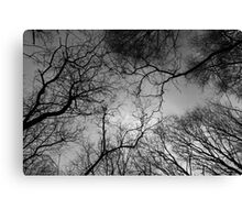 Communication Between The Trees Canvas Print