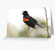 Red Wing Blackbird singing its heart out Greeting Card