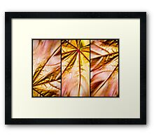 A Leaf in Three Parts Framed Print